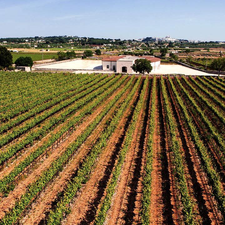 Wine Tour In valle d'Itria 02