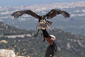experience-natura-volo-dell-aquila-nelle-meravigliose-campagne-pugliesi